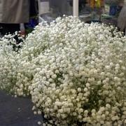 Jilly's Flowers Cardigan Guildhall Market / Marchnad Neuadd y Dref Aberteifi image 7